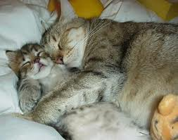 Momma cat and kitten sleeping
