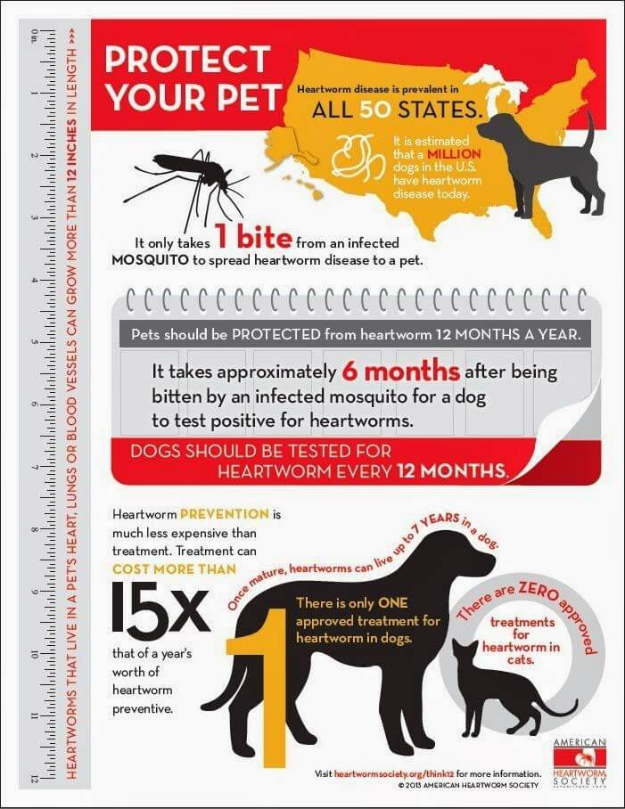 HEARTWORM FACTS