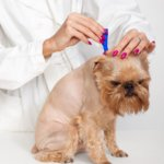 dog-getting-application-of-dermal-flea-and-tick-control